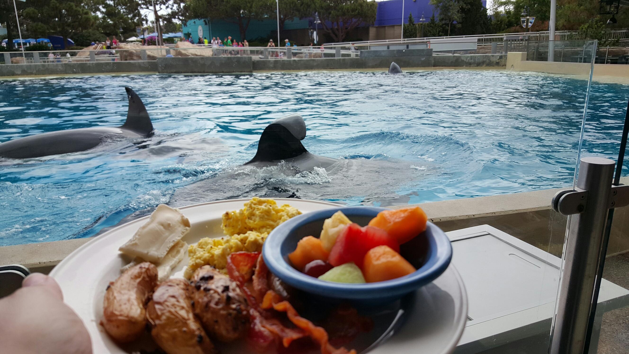 Family Fun At Seaworld Dining With Shamu 174 Magical