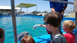 Taking a Behind-the-Scenes Tour at SeaWorld