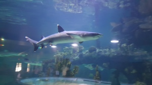 In Phoenix? Check Out Wildlife World Zoo & Aquarium. Fun for the whole family.