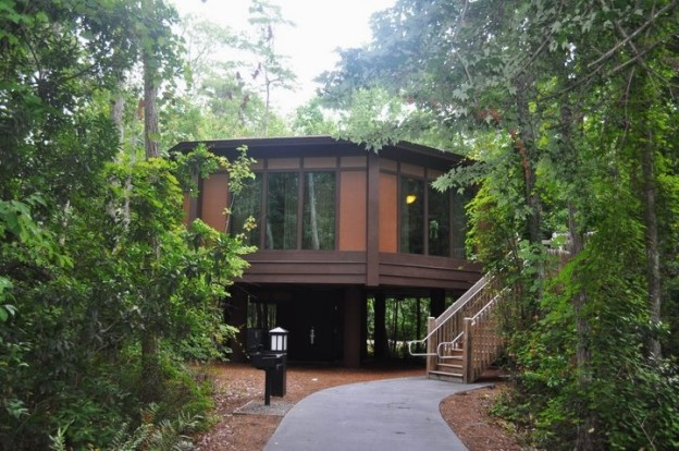 A Treehouse Villa at Disney's Saratoga Springs Resort & Spa