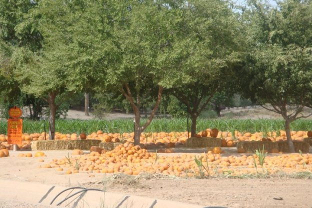 blog-schnepf-farms-pumpkin-patch